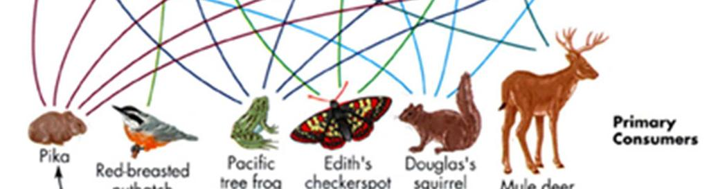 Which graphic representation gives more information about an ecosystem: a food chain or a food web?