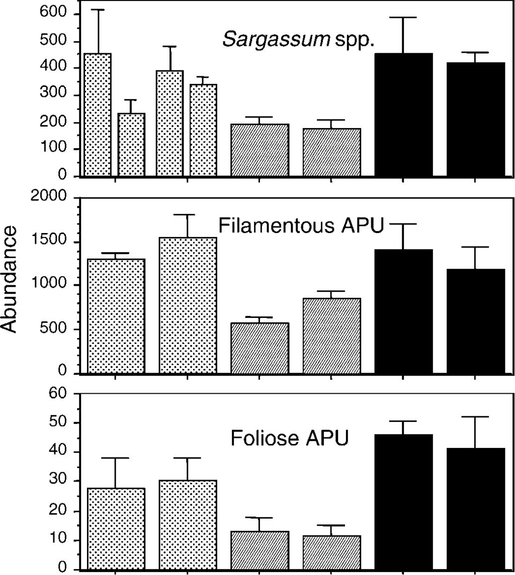 Site species that occurred abundantly on Sargassum at Brook Island and exhibited highest levels of dissimilarity between Sargassum and APUs in the SIMPER analysis were ampithoid species.