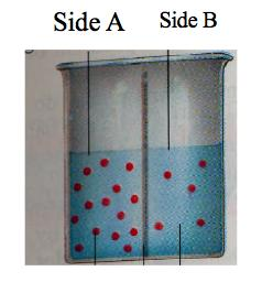 sides A and B. Water is permeable to this membrane.