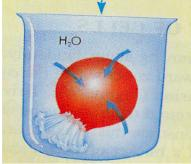 Which of the following is NOT true concerning osmosis? A. Osmosis is the diffusion of water across a selectively permeable membrane. B. Osmosis is a form of passive transport C.