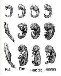 3. Evidence from Embryonic Development.
