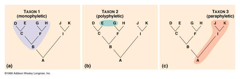 Taxa Taxon (pl. taxa) = any group of organisms that is given a formal taxonomic name.