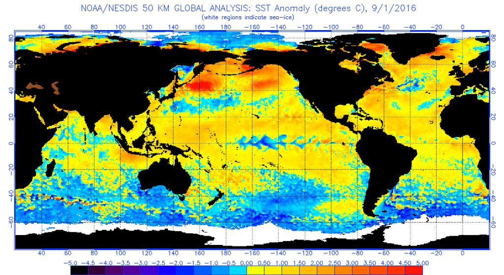 Figure 4 Global sea surface temperatures ( C) for the period ending September 1, 2016 (image from NOAA/NESDIS).