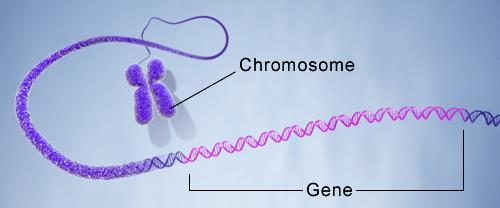 Chromosomes are associations of DNA and proteins: Life on Earth uses DNA as the