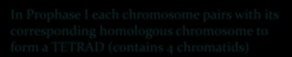 homologous chromosome to form
