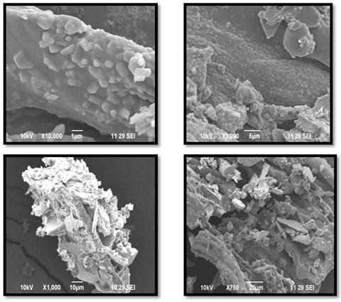 SEM ANALYSIS : Scanning electron microscopy provides the morphology and size of the AgNPs.
