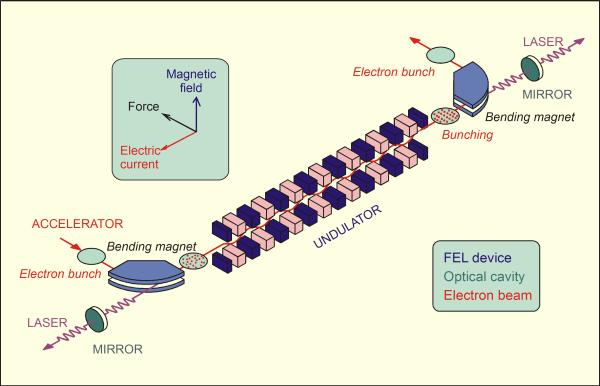 electrons emit bent by magnetic field Produce synchrotron radiation (light) No energy levels Free Electron