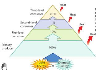 Energy in Communities An organism s rank in a feeding hierarchy is its trophic level.