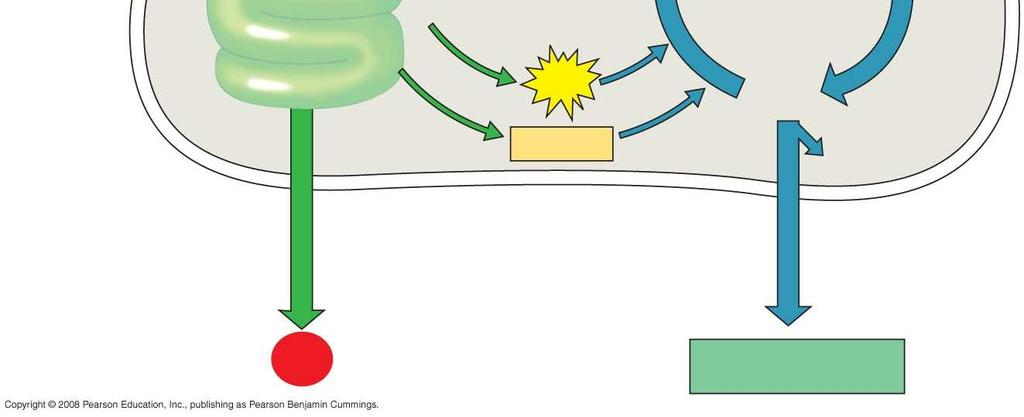 Photosystem I Electron transport chain ATP NADPH RuBP