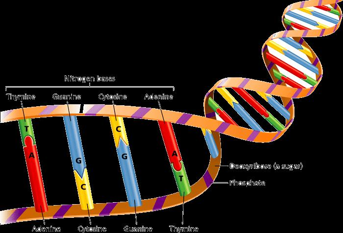 DNA and