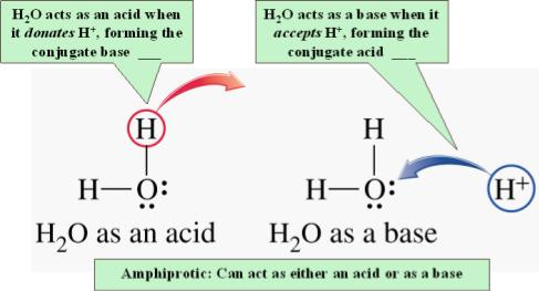 Water is AMPHIPROTIC When an Acid Dissolves in water,