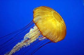 Phylum Cnidaria What organisms make up
