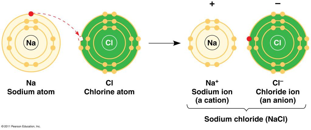 Isotopes- atom that has an unstable nuclei that decays and breaks down at a continuous rate. o Used to date life, follow atoms through chemical processes, etc.
