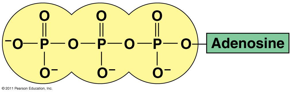ADENOSINE TRIPHOSPHATE (ATP) ATP is an BIOLOGICAL MOLECULES - made from thousand of smaller molecules. o A is a long molecule made of repeating units called.