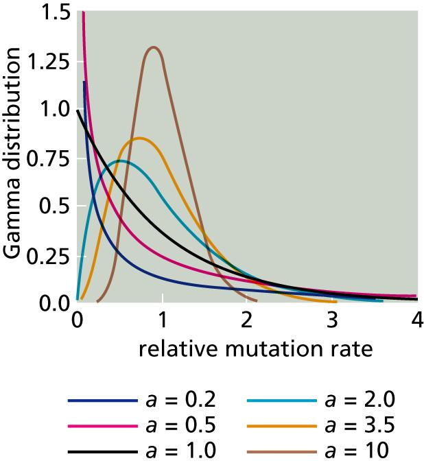Gamma distribution (Γ) Gamma distribution, proposed by T. Uzzell and K Corbinin 1971, which takes account of mutation rate variation at different sequence positions.
