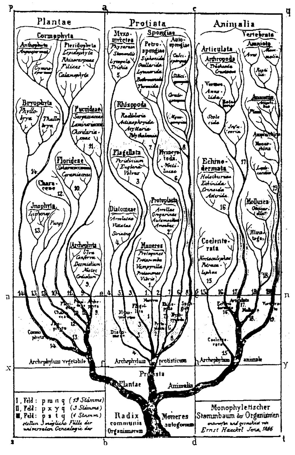 TheTreeofLife The first phylogenetic