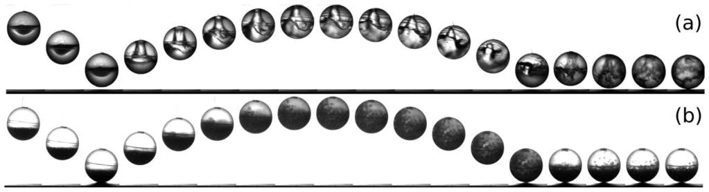 Figure 6 Snapshots of the bouncing dynamics of a sphere partially filled with 15 g of (a) water and (b) grains. These images allow us to observe the motion of the internal material.