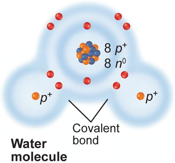 Chemical bond that forms when electrons are shared. Most compounds in living organisms have covalent bonds holding them together.