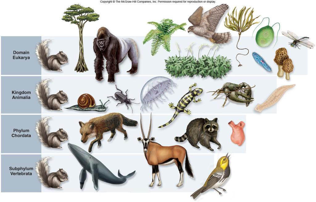 is the science of classifying living things -A classification level is called a taxon Scientific names avoid the confusion caused by common names 8 The Linnaean