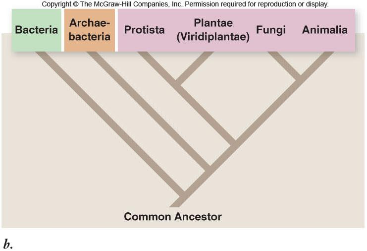 Grouping Organisms Carl Woese proposed a six-kingdom system Prokaryotes Eukaryotes Grouping Organisms Biologists are increasingly adopting a threedomain phylogeny based on rrna studies -Domain