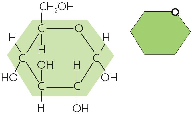Molecules in food store chemical energy