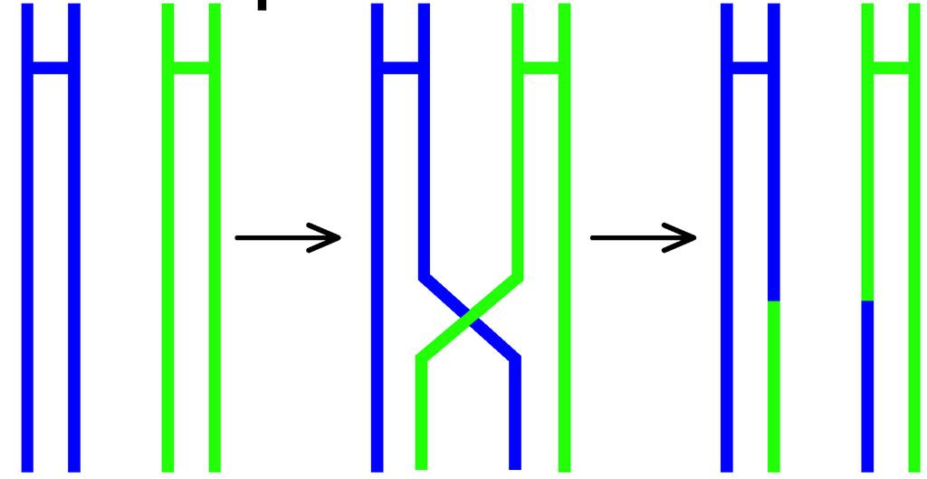chromosome pieces Tetrads the two pairs of sister chromatids of homologous