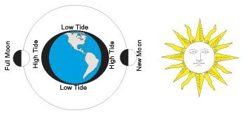in a location every day Caused by daily rotation of Earth on its axis Occur on the side of the Earth where the tide is bulging