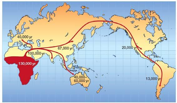Archaic humans living in Asia and Europe (like the