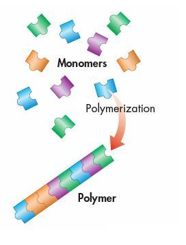 Chemistry of Carbon Formed by polymerization reaction Monomer = subunit Polymer = many monomers linked