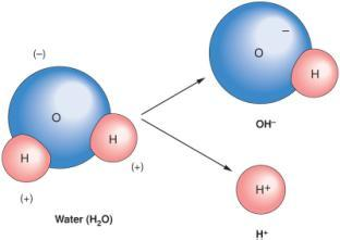 in 2 or O 2 Covalent Bonds In polar bonds electrons are shared unequally ave + and poles