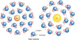 charged ) Atom that gains electrons = anion (- charge) Ionic Bonds 2-13 Ionic bonds are