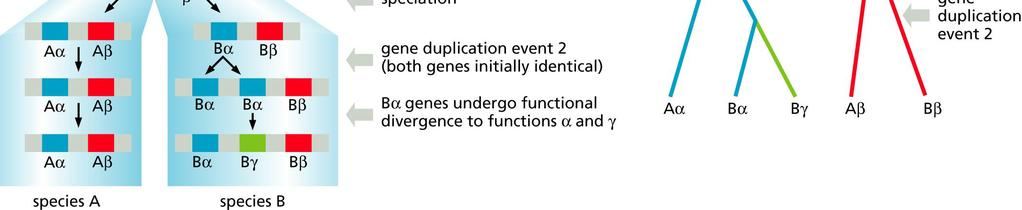 protein sequence. Obtain related sequences by performing a database search.