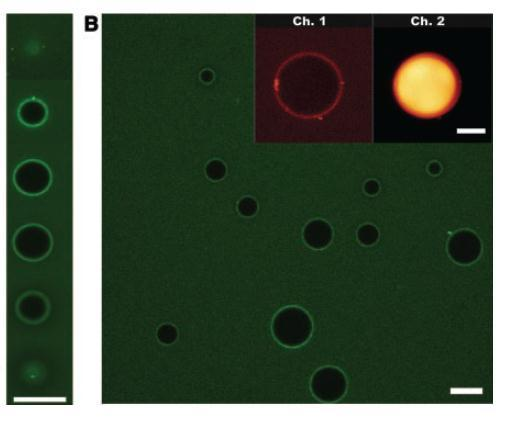 32 Figure 1.16. Fluorescence confocal microscope images of varying sizes of water droplets in toluene in which CdSe NPs show self-assembly at the liquid-liquid interface.