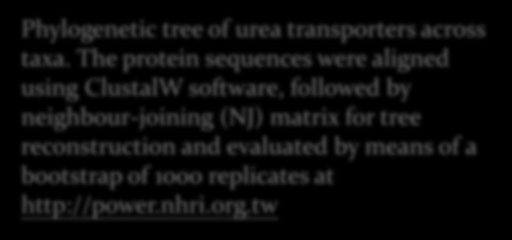 The protein sequences were aligned using ClustalW