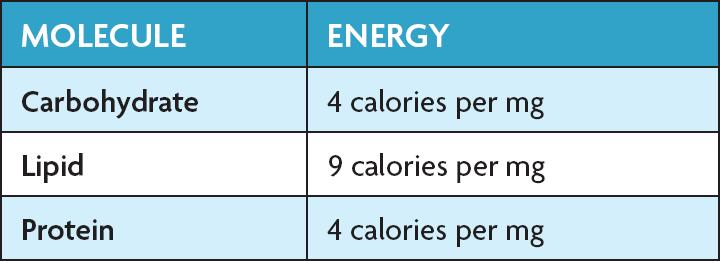 4.1 Chemical Energy and ATP Fats store the most energy.