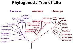 All living organisms fall into one of three D. Scientists use a three-d system to classify organisms.