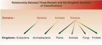The D are divided into 5 or 6 classifications called Kingdoms.