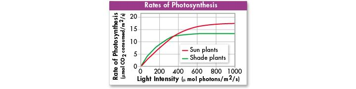 Temperature, Light, and Water High light intensity increases the rate of photosynthesis.