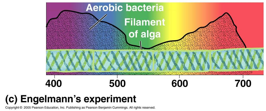 photosynthetic pigment spectrophotometer => measures pigment s ability to absorb various wavelengths of light.
