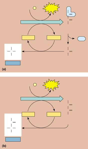 4 Label The Diagram Below Of The Electron Movement With Regard To