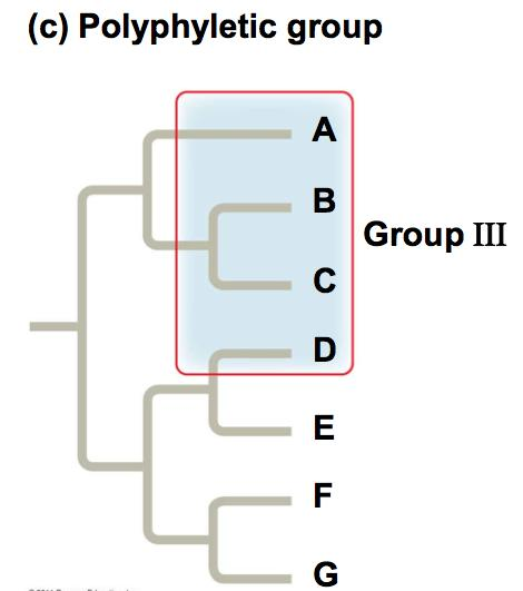 Types of Clades A polyphyletic grouping