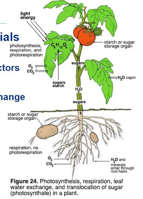 Structure of a plant How they obtain the raw materials for photosynthesis: Sunlight CO2 H2O