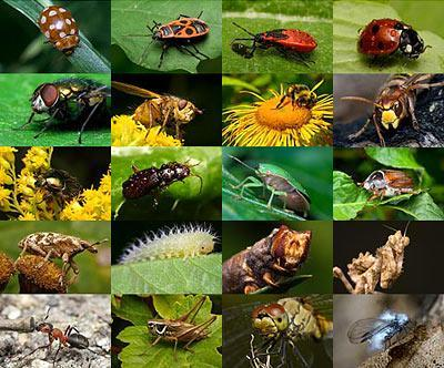 2/3 of which are insects 99% of all known animal species
