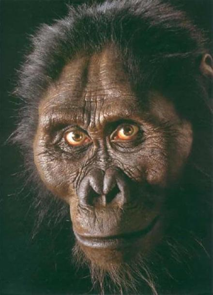 Humans Bipedal Chimp s Gorillas Genus Australopithecine Genus Pongida e Knucklewalking Note: Knuckle-walkers inherited their trait from F the common ancestor for that trait.