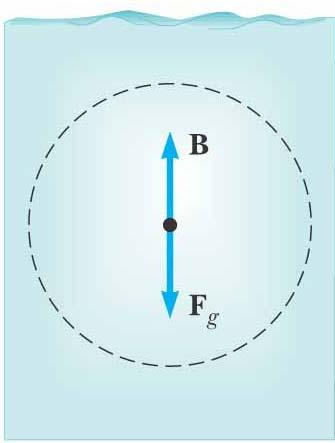 Buoyant Force The buoyant force is the upward force exerted by a fluid on any immersed