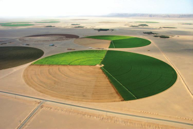 Hydrogeology and hydrology 113 Figure 5.2 Centre pivot irrigation Wadi ad Dawasir (Photo: author).