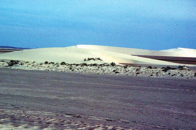 138 Saudi Arabia: An Environmental Overview Figure 6.16 Barchan dunes sweeping across the gravel plains west of Dhahran (Photo: author). 6.9.2.
