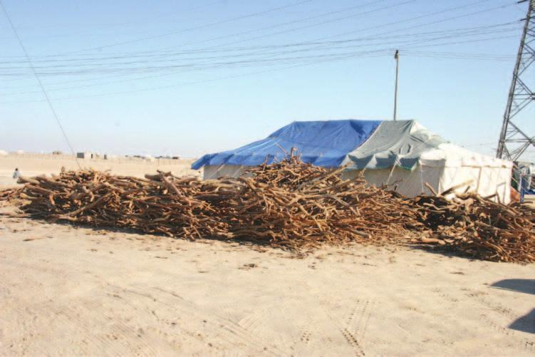 258 Saudi Arabia: An Environmental Overview Figure 10.1 Sale of wood used for picnic fires during the hajj holidays (Photo: author). E. Shortage of forestry specialists The number of forestry specialists is considered very low relative to the number of Government initiatives.