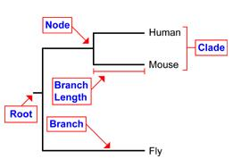Tree Terminology Topology: