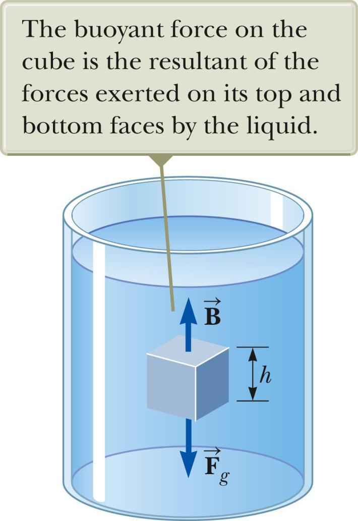 Archimedes s Principle, cont The pressure at the bottom of the cube is greater than the pressure at the top of the cube. The pressure at the top of the cube causes a downward force of P top A.